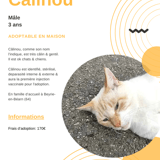 Câlinou, Chat à adopter