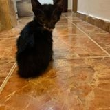 Socrate, Chaton à adopter