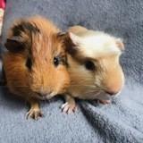 Zebulon et calypso, Animal à adopter