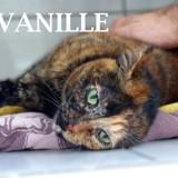 Belle et douce vanille, Chat à adopter