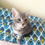 Koopa, Chaton à adopter