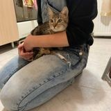 Isis, Chaton à adopter