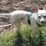 Alba, Chien à adopter