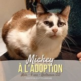 Mickey, Chat à adopter