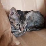 Pym, Chaton à adopter
