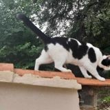 Mamine, Chat à adopter