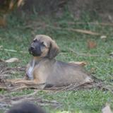Vaïtea, Chiot à adopter