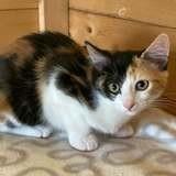 Meg, Chaton à adopter