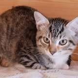 Beth, Chaton à adopter