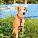Saiko, Chiot à adopter