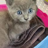Blue, Chaton à adopter