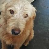 Oscar, Chien à adopter