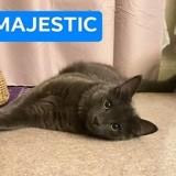 Majestic, Chaton à adopter