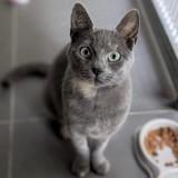 Pelote, Chat à adopter