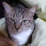 Humi, Chat à adopter