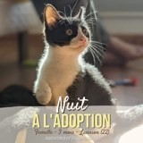 Nuit, Chaton à adopter