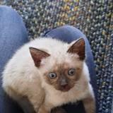 Silver, Chaton à adopter