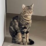 Zazou, Chat à adopter
