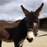 Marius, Animal ane à adopter