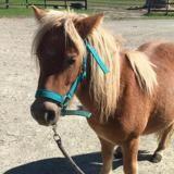 Kerael, Animal âne à adopter