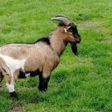 Titeuf, Animal bouc à adopter
