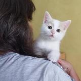 Nougat, Chaton croisé / autre (europeen) à adopter