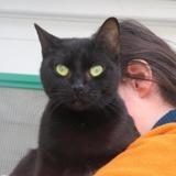 Rita, Chat croisé / autre (européen) à adopter