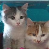 Ariel & rouky, Chaton europeen à adopter