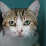 Jeanne, Chat europeen à adopter