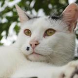 Felix a12582, Chat europeen à adopter