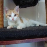 Shifoumi, Chaton europeen à adopter