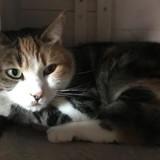 Dora, Chat europeen à adopter