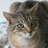Prune, Chat europeen à adopter