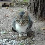 Chataigne a13669, Chaton europeen à adopter