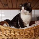 Bilbon, Chat europeen à adopter