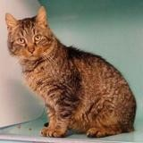 Megara (réservée), Chat europeen à adopter