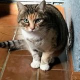 Juju, Chat europeen à adopter