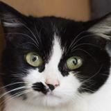 Yang, Chat europeen à adopter