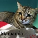 Mamamia, Chat europeen à adopter