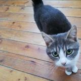Eowyn, Chat europeen à adopter