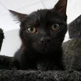 Kaîpi, Chaton europeen à adopter