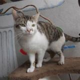Mousse, Chaton europeen à adopter