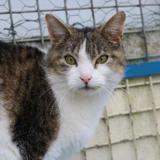 Omnia c15310, Chat europeen à adopter