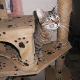 Malice, Chat europeen à adopter