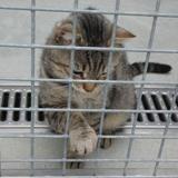 Patapouf(réservé), Chat europeen à adopter