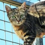 Holly pab19864, Chaton europeen à adopter