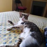 Oshi (reserve), Chat européen à adopter