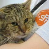 Bouboule, Chat europeen à adopter