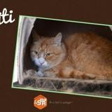 Titi, Chat europeen à adopter