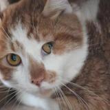 Jean luc, Chat europeen à adopter